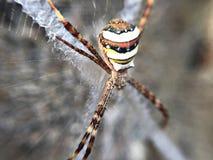 blisko dof makro pająka płytki pajęczynę, obraz royalty free