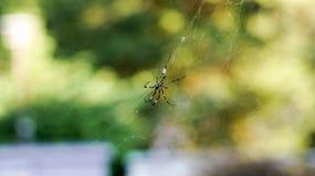 blisko dof makro pająka płytki pajęczynę, obrazy stock