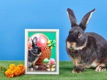 Blisko fotografii z królika i wielkanoc królika koszykowym obsiadaniem Obrazy Royalty Free