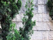 Blisko kamiennych płotowych pięknych zielonych krzaków Zamyka w górę strzału Fotografia Royalty Free