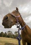 blisko konia. fotografia stock