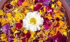 blisko kwiat łóżka Petersburgu święty Rosji, Obrazy Royalty Free