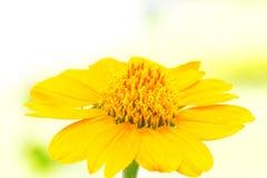 blisko kwiat w żółtym Obraz Stock