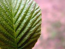 blisko liści, Obrazy Stock