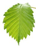 blisko liści, zdjęcia royalty free