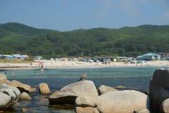 Blisko plaży na skałach siedzi ptaka przy nadmorski, piękne dennego ptaka pozy Obraz Stock