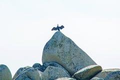 Blisko plaży na skałach siedzi ptaka przy nadmorski, piękne dennego ptaka pozy Zdjęcia Stock