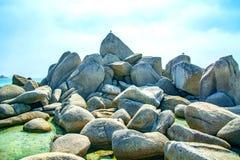 Blisko plaży na skałach siedzi ptaka przy nadmorski, piękne dennego ptaka pozy Fotografia Royalty Free