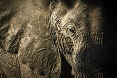 blisko słonia do afryki Zdjęcia Stock