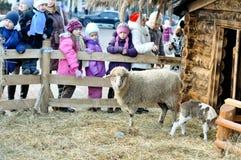 blisko sceny jagnięcy ewe narodzenie jezusa Obrazy Royalty Free