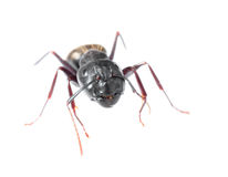 blisko się mrówki. zdjęcia royalty free