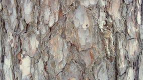 blisko szczekać strzału drzewo, Energia życie w drzewie obraz stock