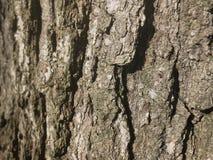 blisko szczekać strzału drzewo, Zdjęcie Stock