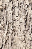 blisko szczekać strzału drzewo, Obraz Stock