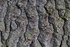 blisko szczekać strzału drzewo, Fotografia Stock
