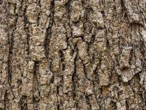 blisko szczekać strzału drzewo, Obrazy Royalty Free