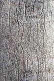 blisko szczekać strzału drzewo, Obraz Royalty Free