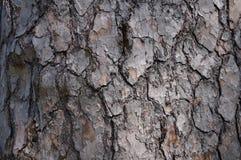 blisko szczekać strzału drzewo, Zdjęcia Royalty Free