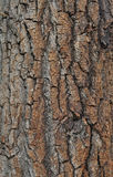blisko szczekać strzału drzewo, Zdjęcie Royalty Free