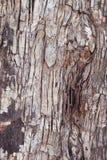 blisko szczekać strzału drzewo, Obrazy Stock