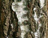 blisko szczekać strzału drzewo, Zdjęcia Stock