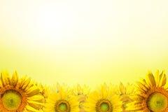 blisko tła słonecznik, Fotografia Stock