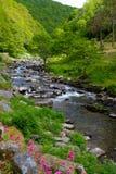 blisko watersmeet Devon lynmouth Obrazy Royalty Free
