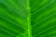 blisko zielonej liści, Fotografia Royalty Free