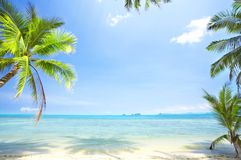 Bliss. View of nice tropical empty sandy beach with some palm royalty free stock photo