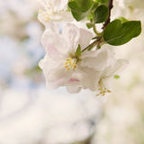 Bliss of spring Royalty Free Stock Image