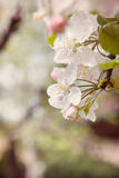 Bliss of spring Stock Images