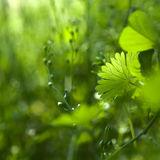 Bliss of spring Royalty Free Stock Photo