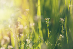 Bliss of spring Stock Photography