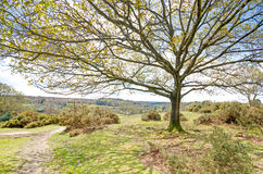 Blissford View. Blissford Hill in the New Forest National Park Stock Images