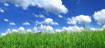 Blissful grassland. Panoramic view of blissful grassland Stock Photos