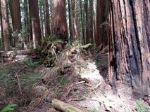 Blitz gebrannter Baum Stockfotografie
