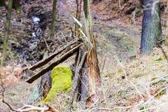 Blitz-getroffener Baum im Wald Lizenzfreies Stockbild