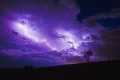 Blitz hinter kleinem Baum Lizenzfreie Stockbilder