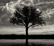 Blitz im Himmel und Sturm und eine Baumreflexion Stockfotos