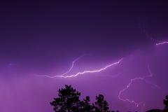 Blitz im nächtlichen Himmel über den Treetops Lizenzfreies Stockbild