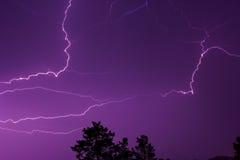 Blitz im nächtlichen Himmel über den Treetops Stockbilder