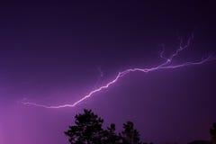 Blitz im nächtlichen Himmel über den Treetops Lizenzfreies Stockfoto