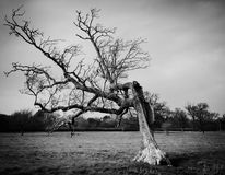Blitz schädigender Baum Stockfotos
