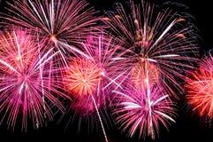 Blitze von Feuerwerken von roten und rosa Farben Lizenzfreie Stockfotos