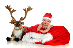 Blitzen and Baby Royalty Free Stock Photos