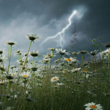 Blitzschlag über Feld. Stockfotografie