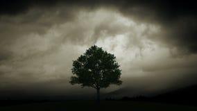 Blixt bränner trädet arkivfilmer