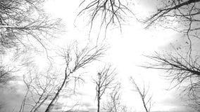 Blixtstorm i en skog arkivfilmer