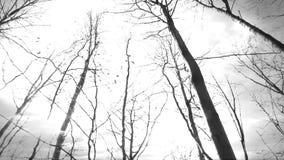 Blixtstorm i en skog stock video