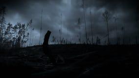 Blixtstorm i en skog lager videofilmer